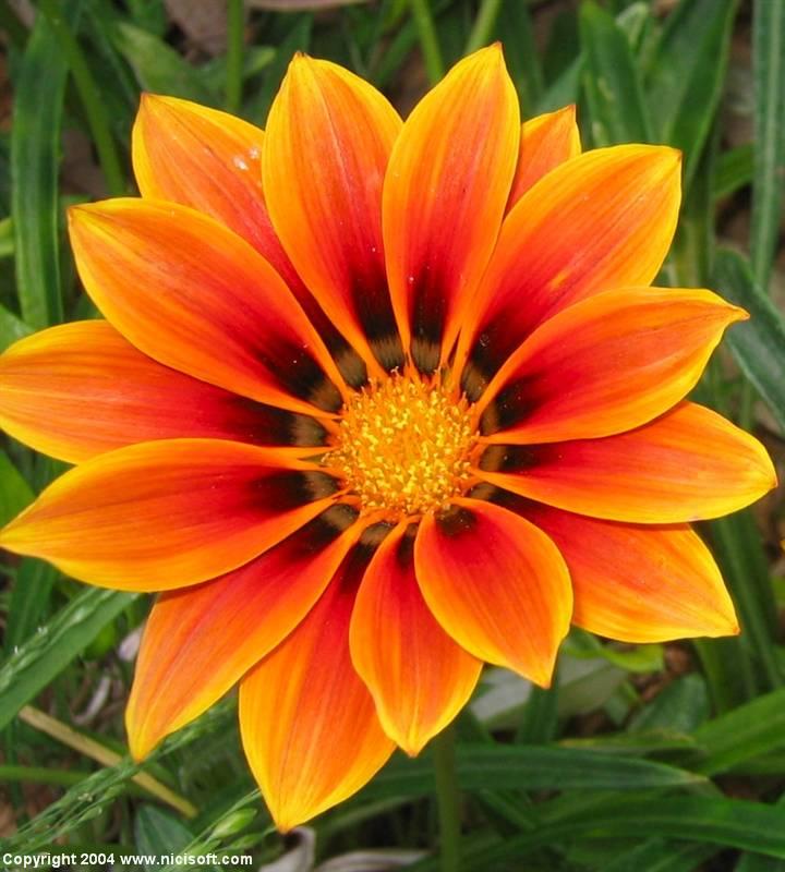 flower-picture-2.jpg