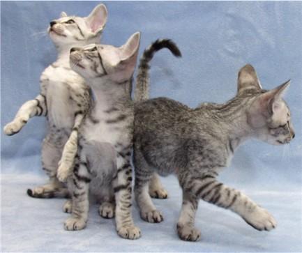 kitties2.jpg